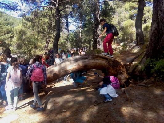 La Pedriza: convivencia y diálogo con la naturaleza