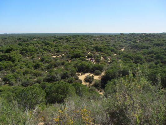 Clases 17: Excursión a Doñana 2018