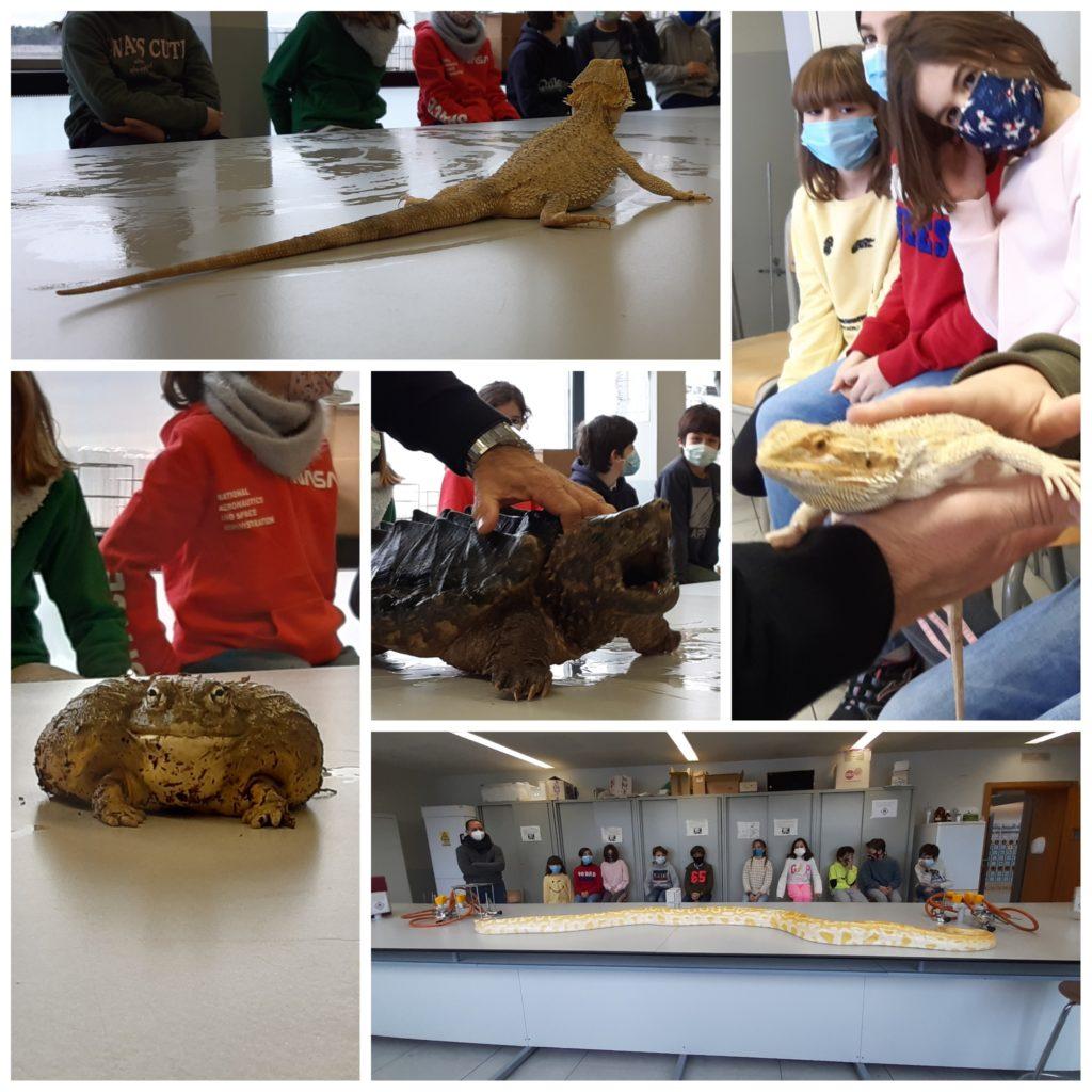 Clase X: Taller de Anfibios y Reptiles